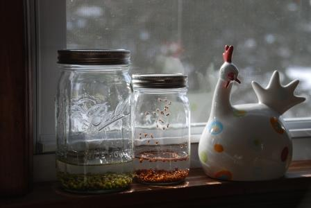 Sprouting Jars